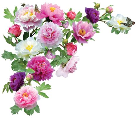 Flower Border Transparent