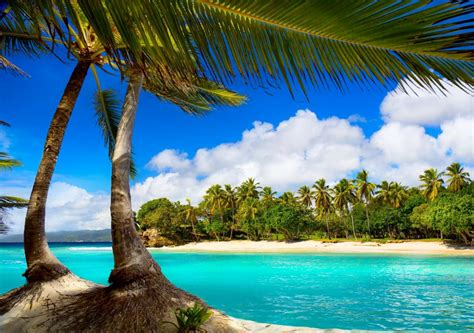 vacation beach summer tropical sea palms paradise ocean