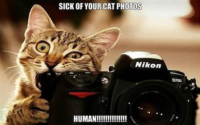 Funny Meme Cat Humor Grumpy Quote Wallpapers