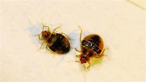 top 5 bed bug washing detergent termites blog With does washing sheets kill bed bugs