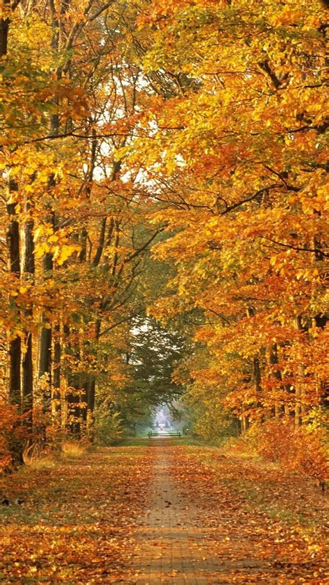 1080p Fall Backgrounds Hd by Hd 1080p Fall Wallpaper 79 Images