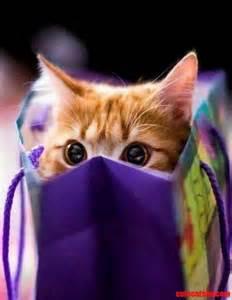 Cat in Shopping Bag