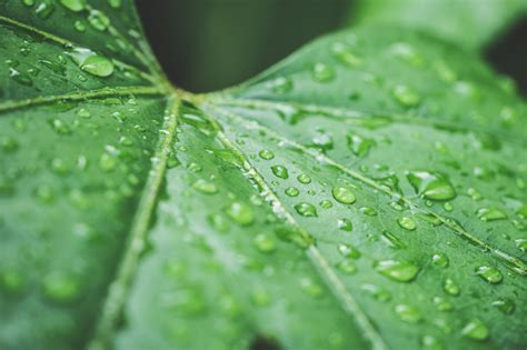 Raindrops On Green Leaf 4k Wallpaper  Hd Wallpaper Background