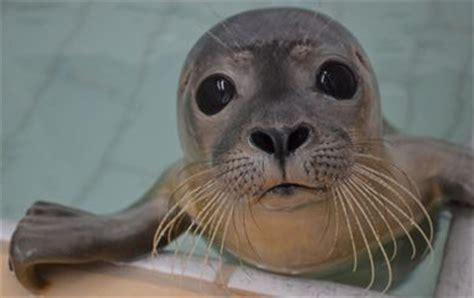 foknl nieuws zeehondenopvang moet worden ingeperkt