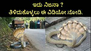 Seven headed snake found in Karnataka secret revealed in ...