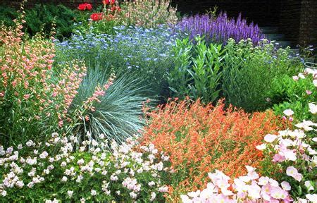 best plants for xeriscaping xeriscape personal touch landscaping colorado springs co personal touch landscape gardening