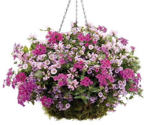 hanging basket flowers proven winner 16 quot hanging basket 6001 ray hunter florist garden our largest hanging