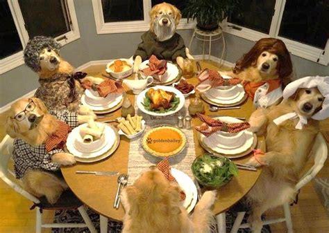 dogs celebrating thanksgiving  leave  feeling