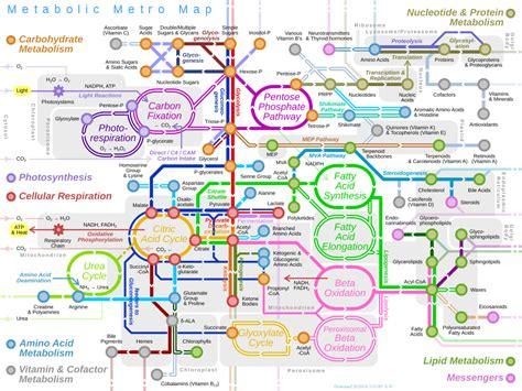 file metabolic metro map svg wikimedia commons