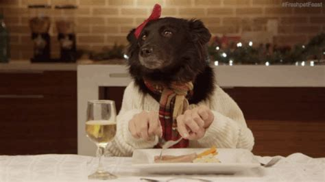 dog eating at table eating gif find share on giphy