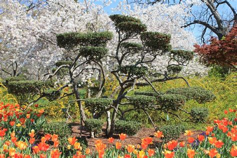 botanical gardens dallas 25 best things to do in dallas tx the tourist