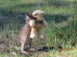 The Wild Hug : wild baby kangaroo still comes home to hug his teddy bear after release ~ Eleganceandgraceweddings.com Haus und Dekorationen