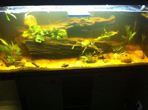mise en eau aquarium photos d aquarium page 240