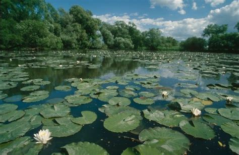 interesting freshwater facts  interesting facts
