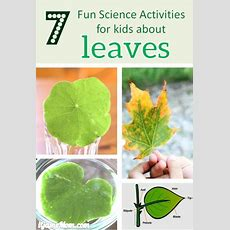 8 Fun Science Activities For Kids About Leaves