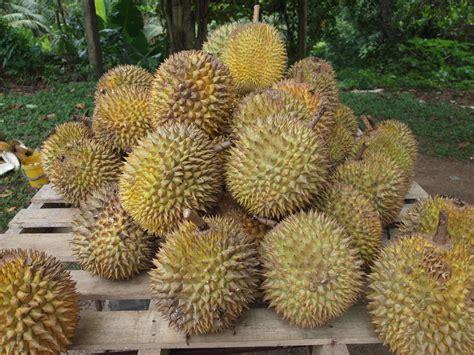 dorian cuisine file durian jpg
