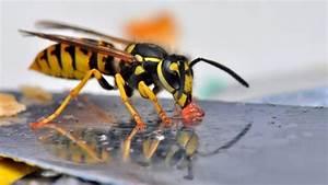 Mittel Gegen Wespen Im Dach : wespennest im winter wespennest im winter entfernen gut f r tier und mensch wespennest ~ Eleganceandgraceweddings.com Haus und Dekorationen