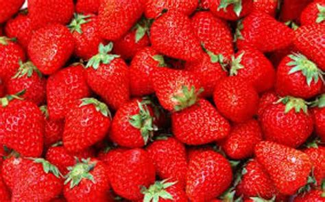 strawberry facts 10 interesting strawberries facts my interesting facts