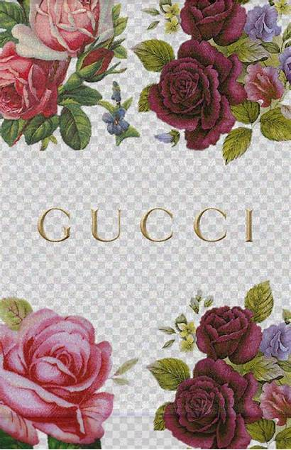 Gucci Iphone Vuitton Louis Backgrounds Rose Wallpapers