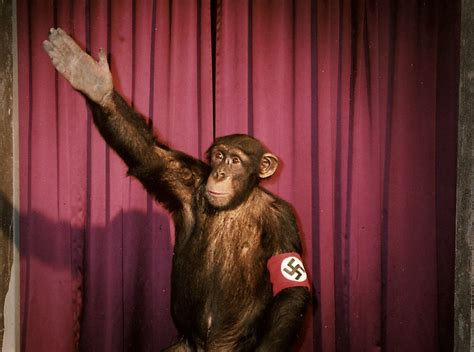 heil hitler das schwein ist tot german tv channel ndr