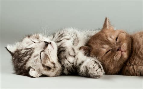 wallpaper kucing hd group