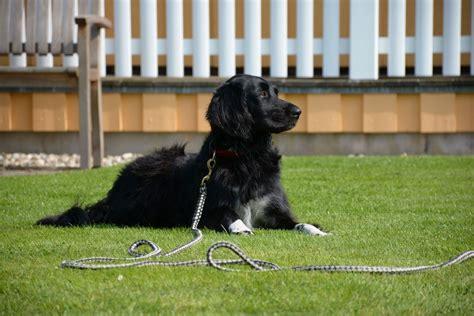 Frommeferienhäuser  Urlaub Mit Hund