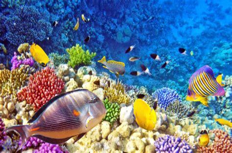 gambar foto tunjukan mengerikannya dunia dasar laut bawah