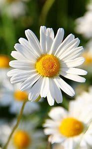 Pinterest Flowers