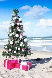 christmas on the beach with coconut rum toffee cupcakes frog prince paperie