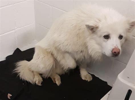 rescue dogs   kelowna news castanetnet
