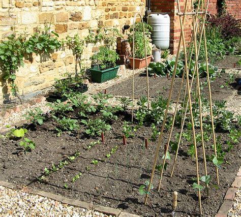 vegetables gardening ideas for summer 220 hostelgarden net