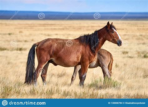 horses asia wild central steppe grazing park