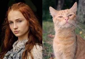 of thrones cat of thrones characters as cats hiconsumption
