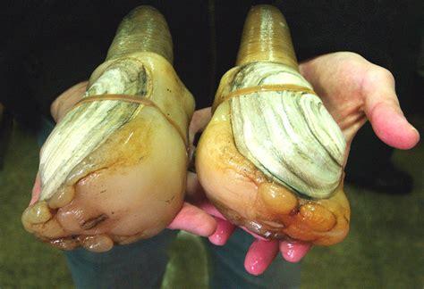 washington officials  shellfish  safe  china