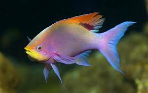Colorful fish wallpaper - 767260