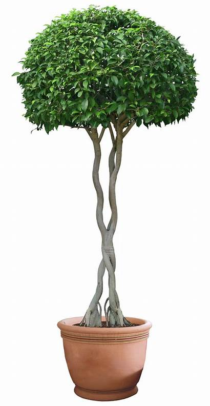 Plant Tree Plants Transparent Trees Garden Helping