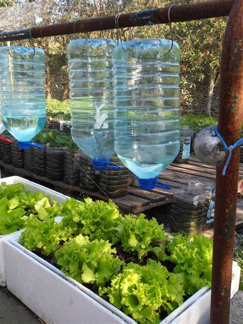 sistema de riego por goteo reusando galones de agua