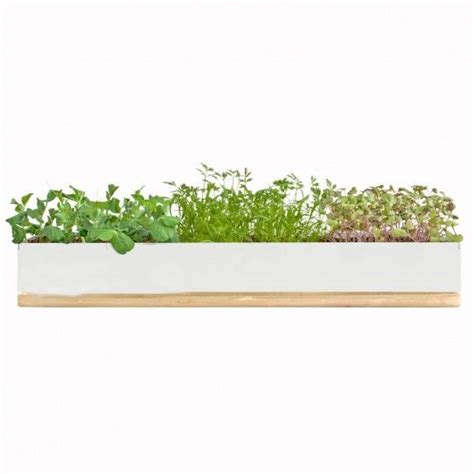 Window Spice Garden by Microgreens Windowsill Grow Box Around The Estate Grow