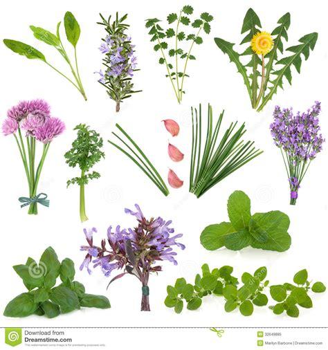 herb florist herbs royalty free stock photo image 32649885