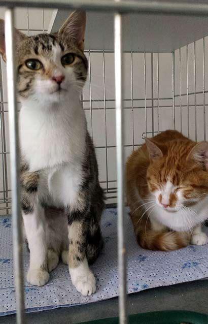 tierheime notruf fuer die vielen jungkatzen  colmar