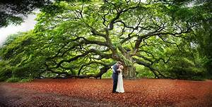 Under the angel oak tree charleston sc wedding for Affordable wedding photography charleston sc