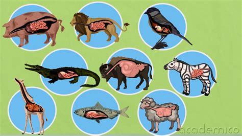 Хранене при животните - Човекът и природата 5 клас ...