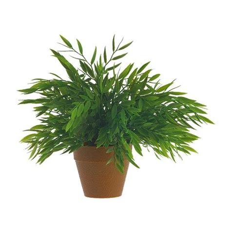 plants for pots pots for plants casual cottage