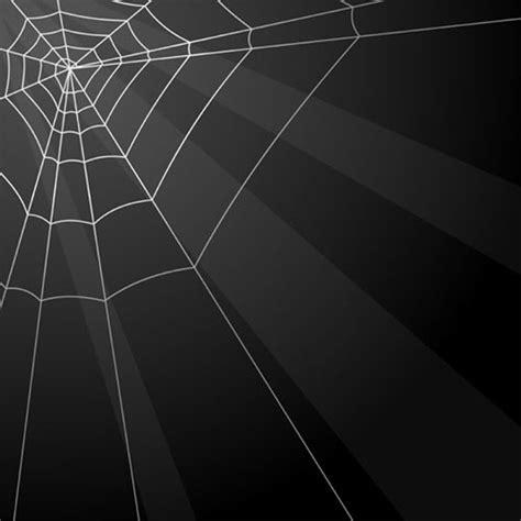 spiderweb  vector    vector