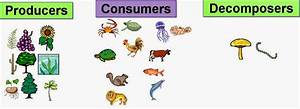 Science online: The type of the living organisms according ...