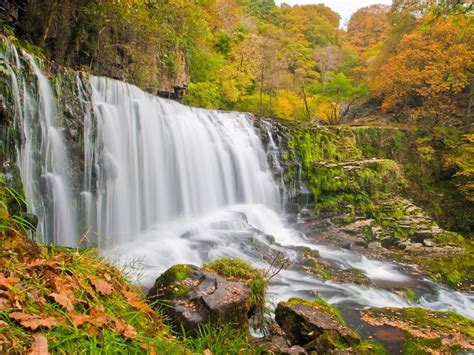 waterfall  autumn curtain  water trees  yellow