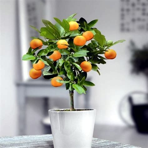 You can dwarf fruit trees in pots and growing trays on the