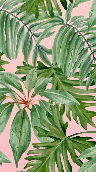 Wallpapers Aesthetics Aesthetic Plant