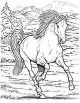 Horse Coloring Herd Pages Printable Unique Getcolorings Sheet sketch template