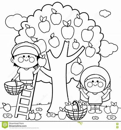 Apple Coloring Apples Pages Children Harvesting Printable